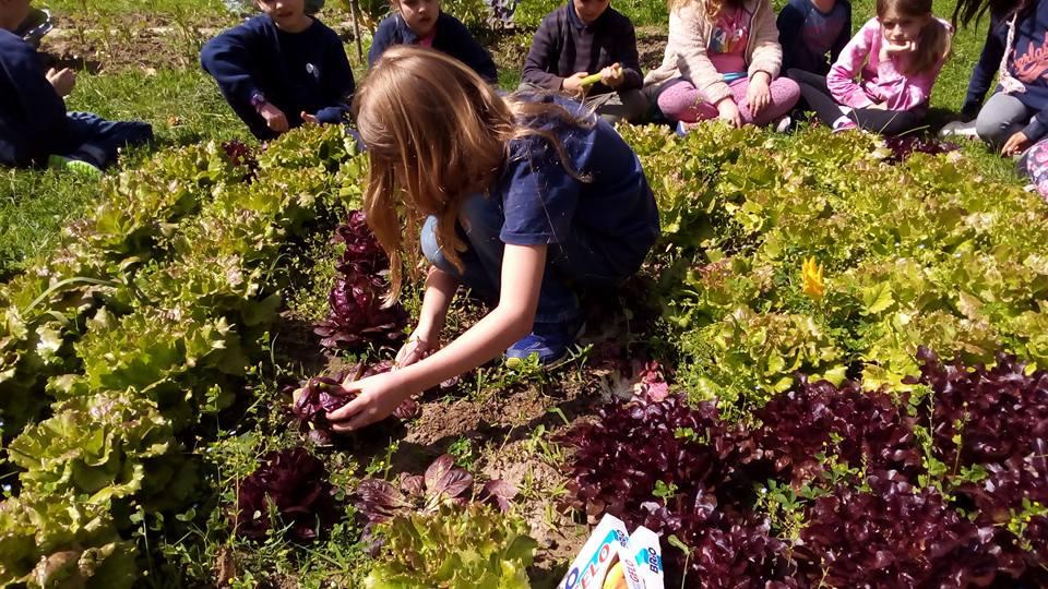 Corso orti scolastici e giardini educativi aicare per for Corso progettazione giardini