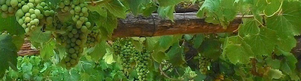 """""""I Buoni Frutti"""" presenta la sua """"Community"""": confronto e diffusione di esperienze di agricoltura sociale, consumo etico, partecipazione responsabile"""